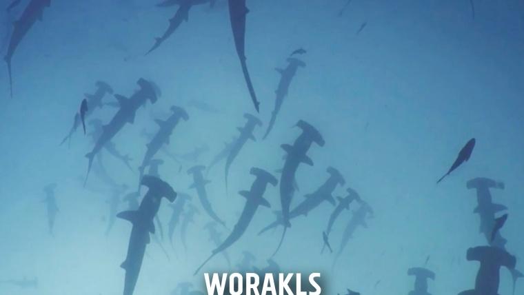 Worakls Sur le front des animaux menacés sonate